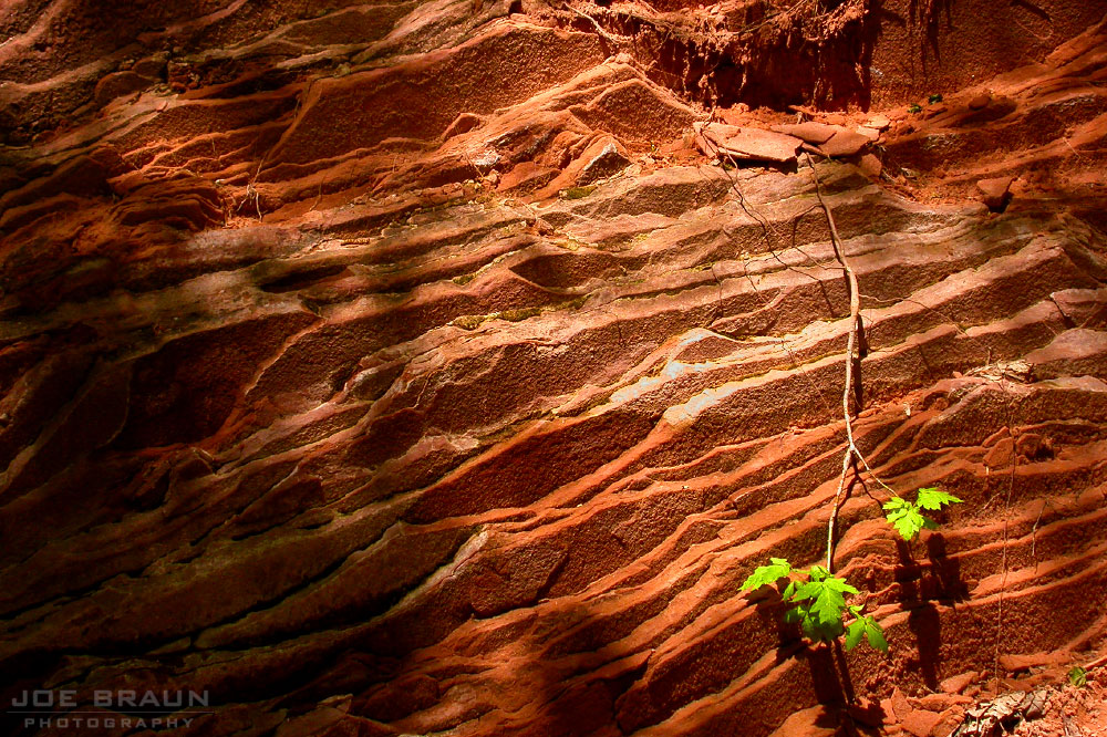 Taylor Creek Trail photo (Zion National Park) -- © 2006 Joe Braun Photography