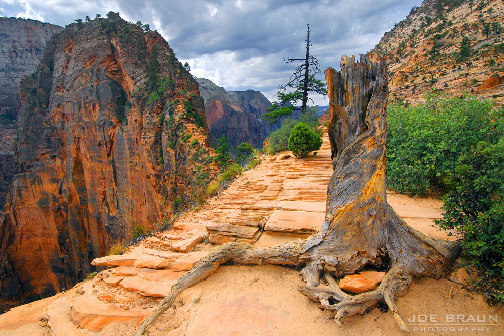 Zion+angels+landing+trail