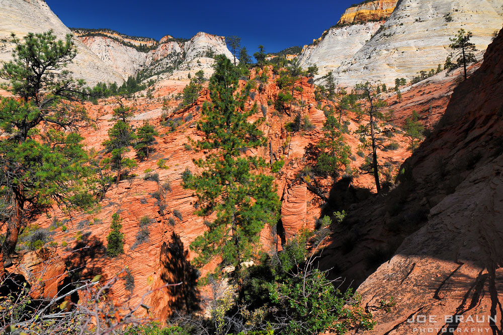 Jughandle Arch photo (Zion National Park) -- © 2008 Joe Braun Photography