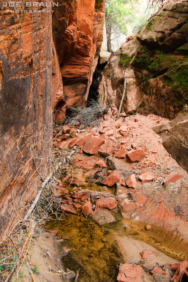 Upper Pine Creek photo (Zion National Park) -- © 2010 Joe Braun Photography