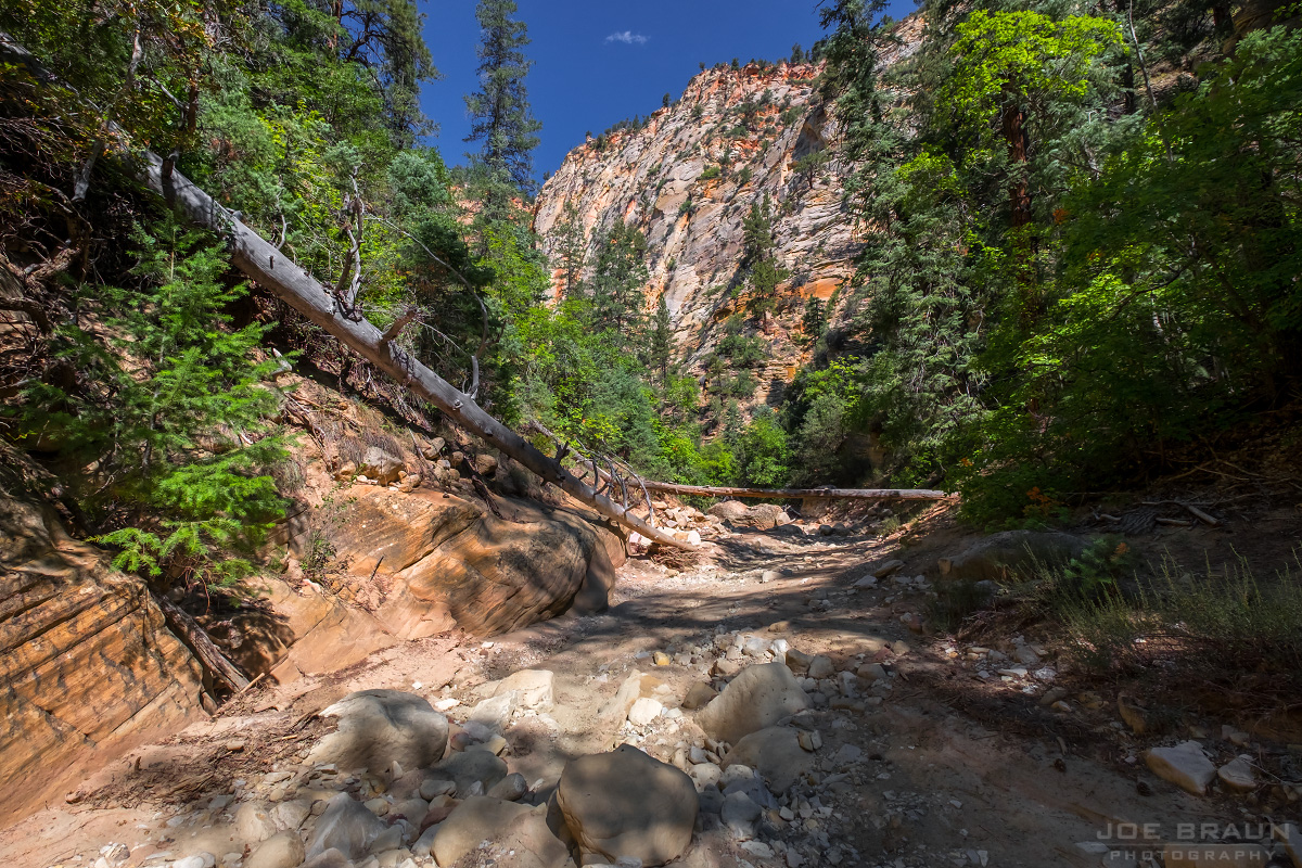 Birch Hollow (Zion National Park) -- © 2015 Joe Braun Photography